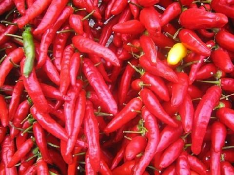 Filiera italiana del peperoncino – Storie in corso